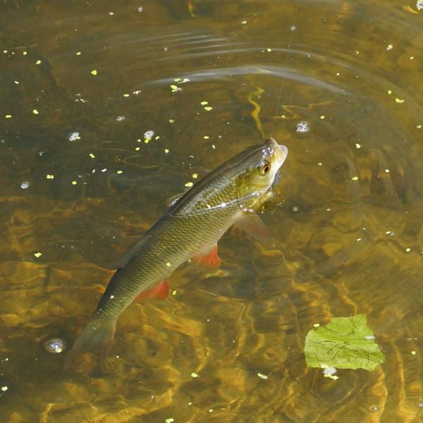 Fliegenfischen in Thüringen